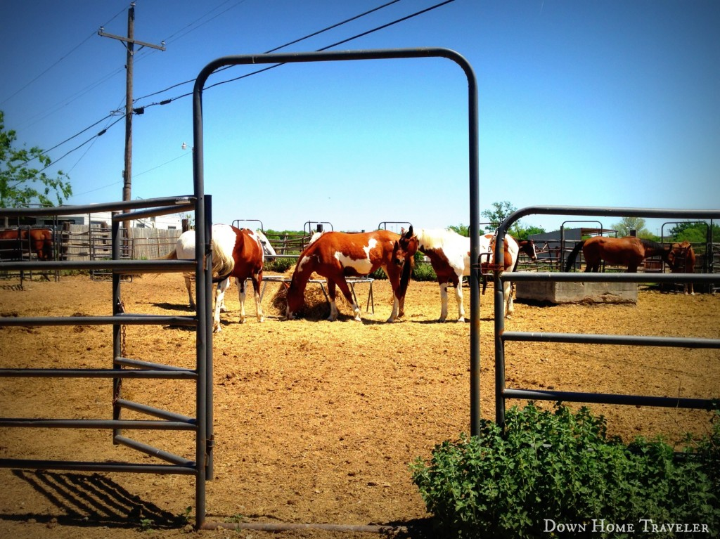 DFW-Bucket-List, Horseback-Riding, Texas, Horses,Outdoor-Activities, Stables