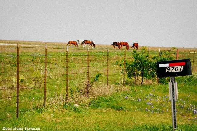 DFW-Bucket-List, Texas, DFW, Ranch, Texas-Ranch, Horses