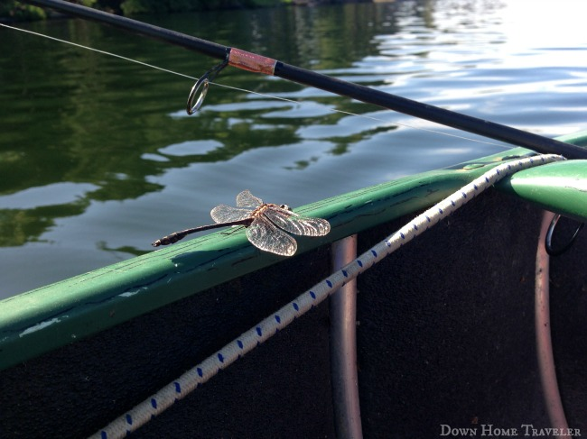 Vermont, Canoeing, fishing, Fairfield Pond, Dragonfly