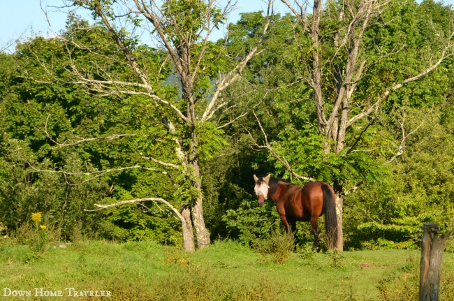 #Vermont #horse #farmers #franklincounty